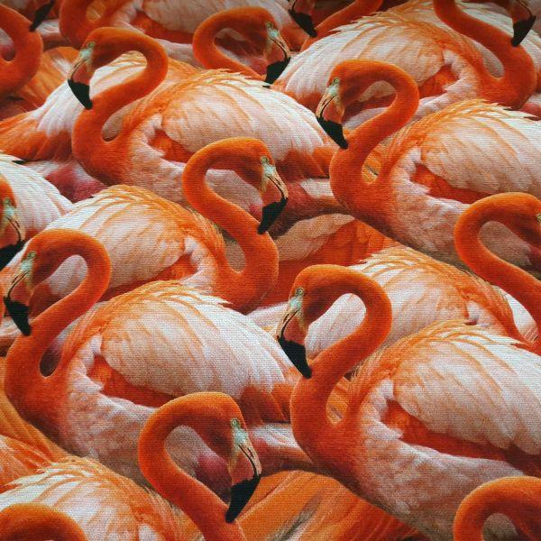 Stoff Meterware Baumwolle Flamingos Fotodruck Digitaldruck 0,5