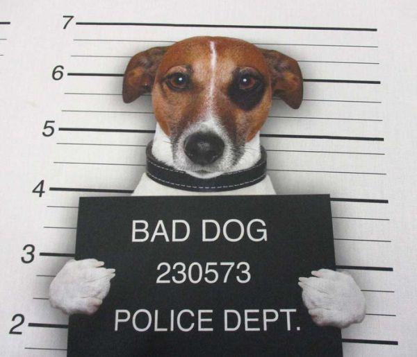 Stoff Baumwolle Digitaldruck Hund Jack Russell Mug Shot Polizeifoto
