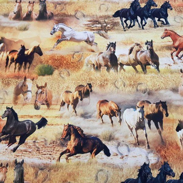 Stoff Meterware Baumwolle Pferde Fotodruck Mustang Haflinger Pferd Rappe Digital