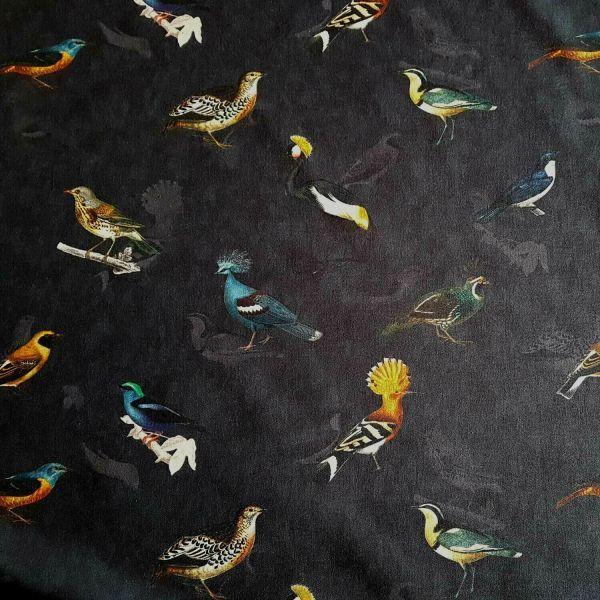 Stoff Meterware Baumwollstoff Vogel Vögel Wiedehopf bunt schwarz blau Digital 0,5