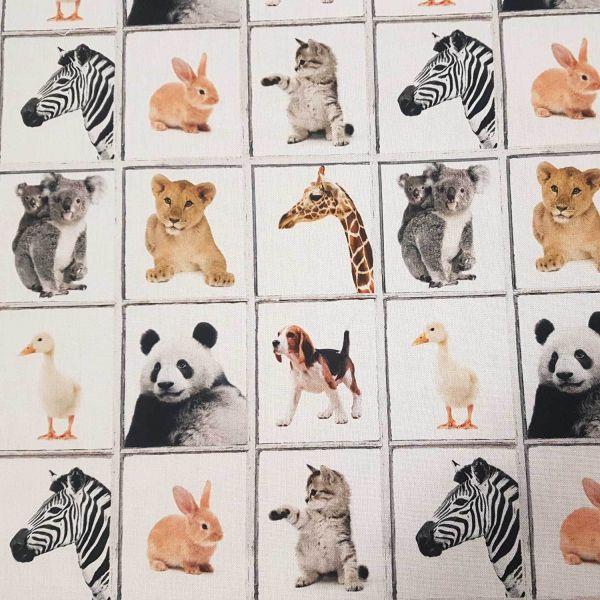Stoff Meterware Tierbabys Memory Katze Löwe Hund Koala Panda Digitaldruck 0,5